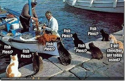 fishcats